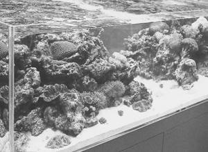 аквариум, аквариумы дешево